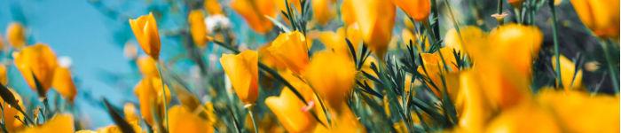 Garden & Flowers Discount Code